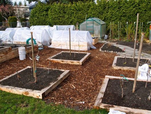 backyard orchard prep